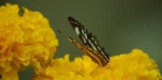 প্রজাপতি মেলা