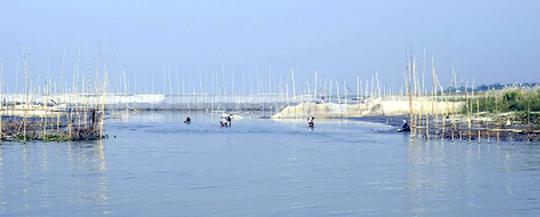 দোহারে পদ্মায় বাঁশের বেড়া দিয়ে মাছ শিকার