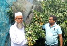 নবাবগঞ্জে লিচু চাষে স্বাবলম্বী কৃষক